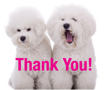 Bichon Thank You